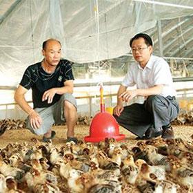 九龙村党总支第一书记杨传杰为贫困户建养鸡场